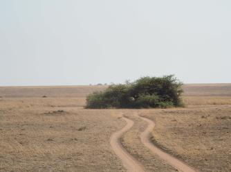 Serengeti Round-a-bout