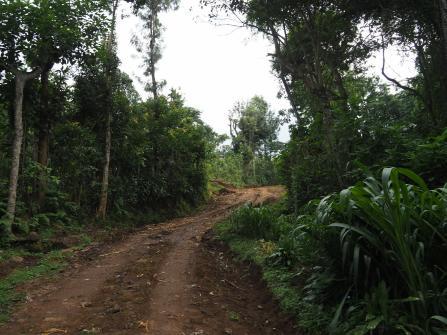 Roads around the village