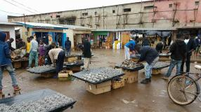 Lots of dried fish for sale