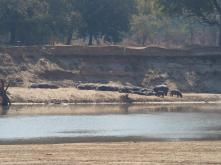 Hippos across the river, they walked into our campsite at night!