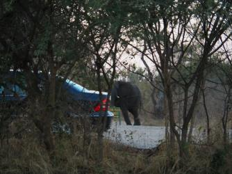 Elephants in the car park!