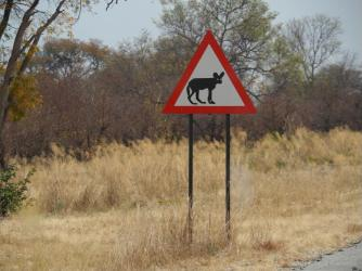 Watch out for African Wild Dogs