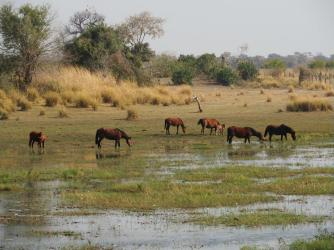 Lots of horses grazing on the bank