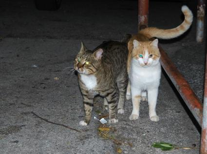 Street cats near our airbnb... we fed them regularly